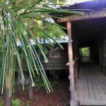 Wet pine needles Quad background (2)